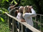 Bird watching at Magee Marsh in Oak Harbor, Ohio.